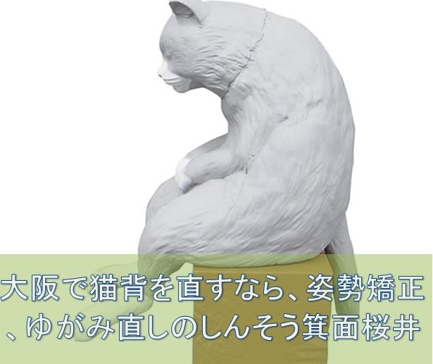 nekoze_cat